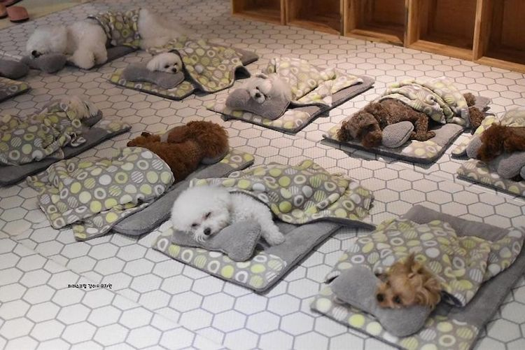 Chiots sieste