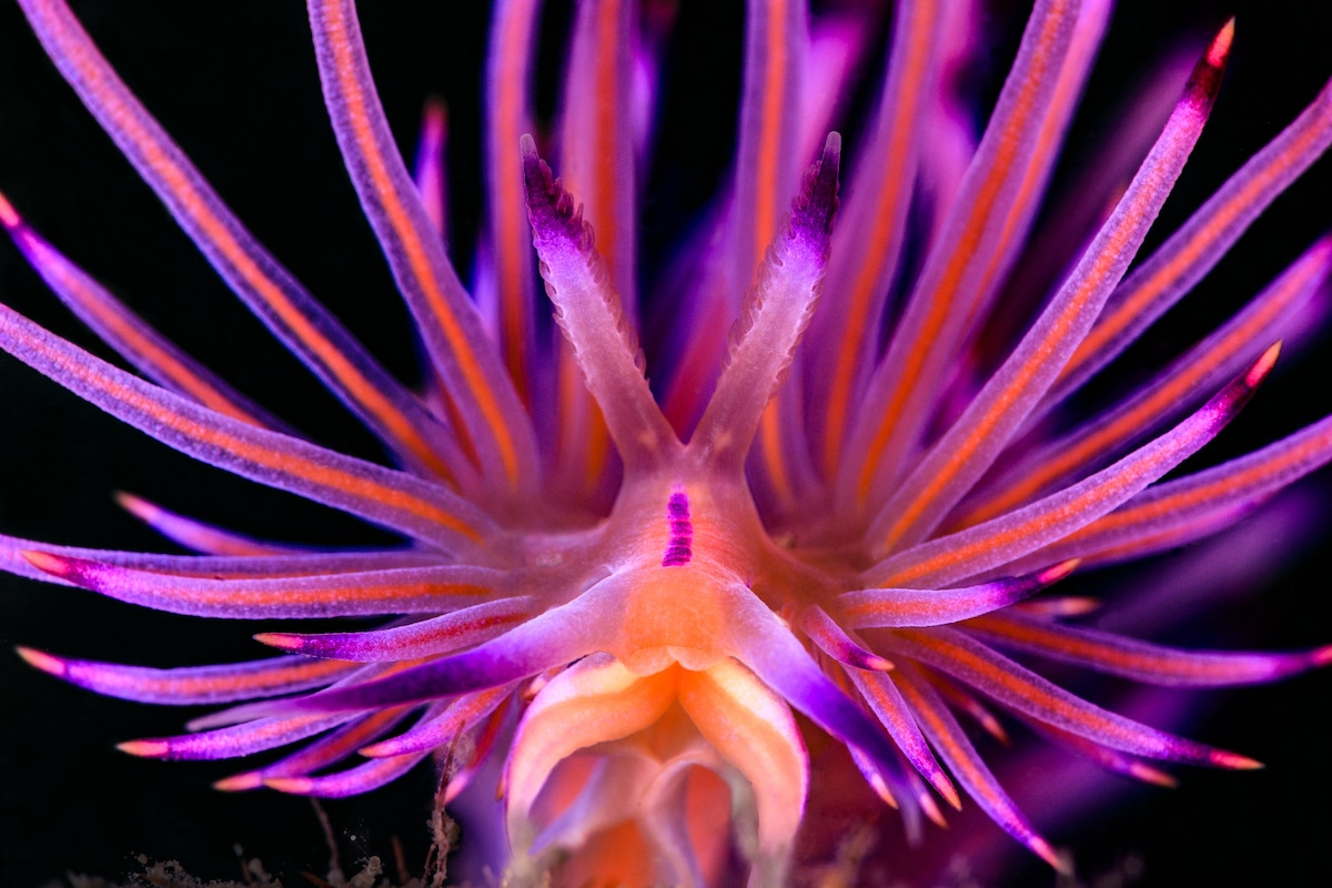 Close Up Portrait d'un nudibranche