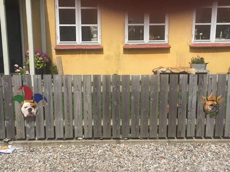 Bulldog Funny Painted Fence