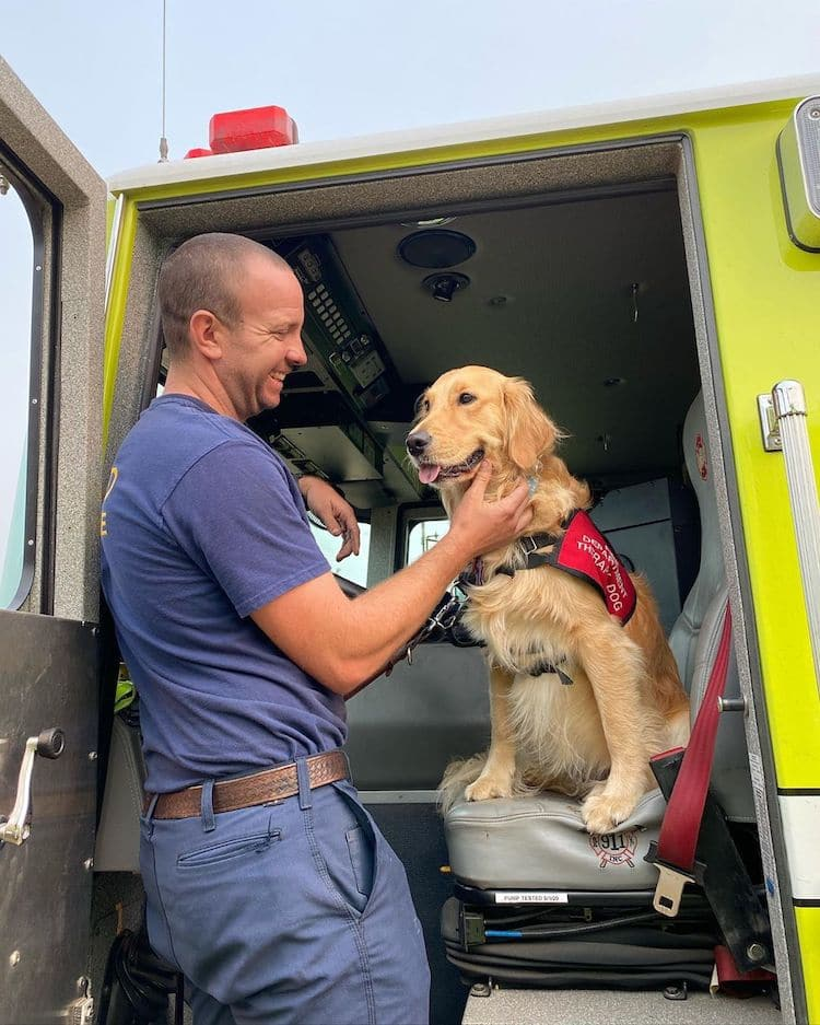 Kerith The Golden Retriever Therapy Dog réconforte les pompiers en Californie