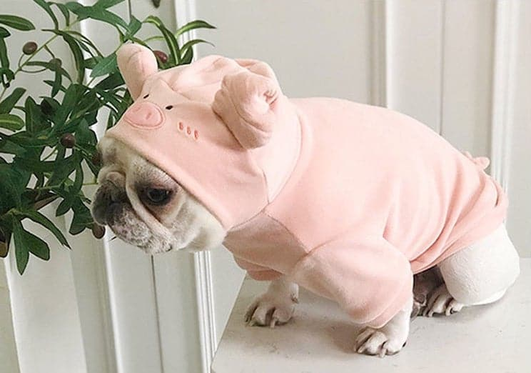 Costume d'Halloween Chien Cochon