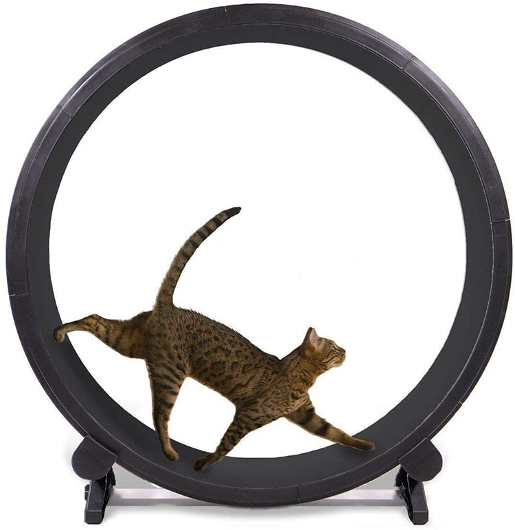 Roue d'exercice Fast Cat